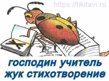 Учитель жук стихотворение