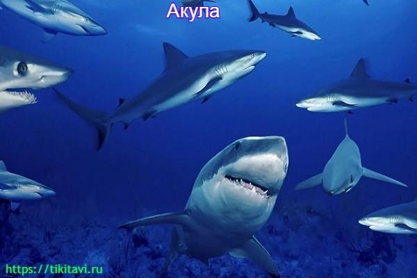 Акула алфавит от а до я с картинками