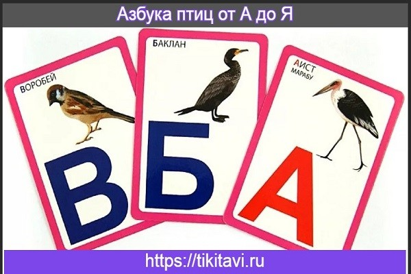 Азбука птиц от А до Я
