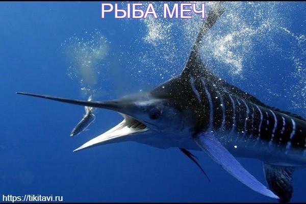 Рыба меч алфавит рыбы от а до я с картинками