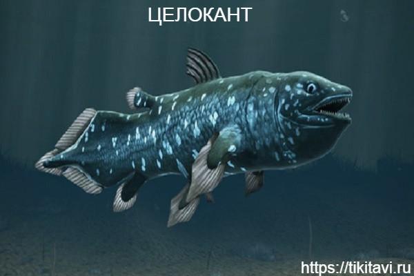 Целокант алфавит рыбы от а до я с картинками