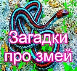 Загадки с ответом змея