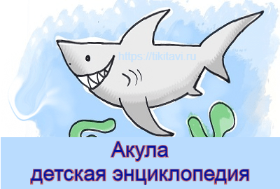 Энциклопедия про акул детская