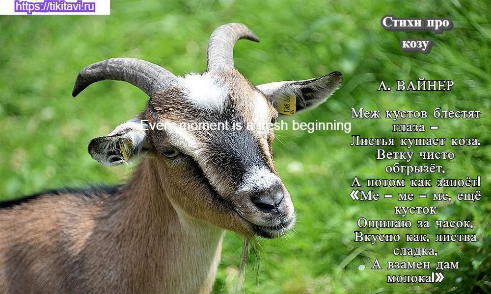 Стихи про козу  для детей короткие