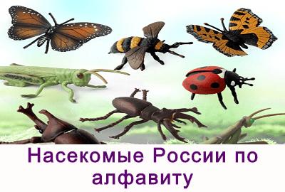 Насекомые России по алфавиту