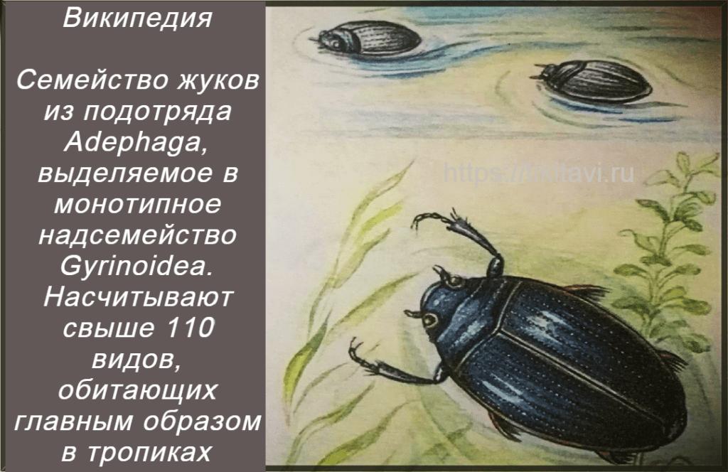 Vertyachka nasekomoe