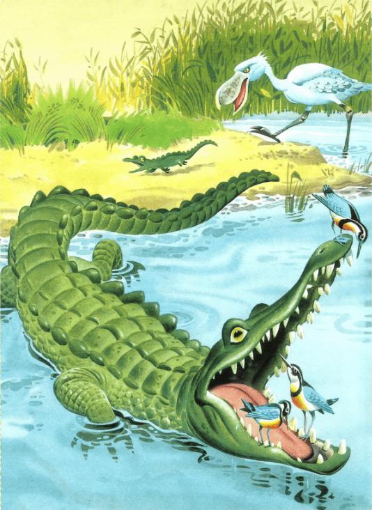 Однажды злой и страшный крокодил Карарара разговорился с крошечной пичугой, которая беспечно собирала червяков возле самого его носа