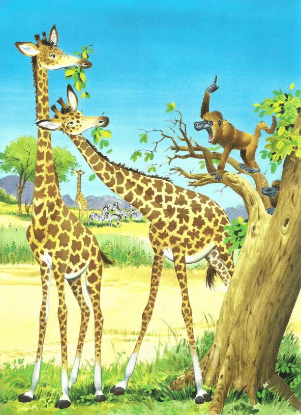 Однажды два жирафа, Макс и Хоня, мирно лакомились нежными и сочными листьями баобаба.